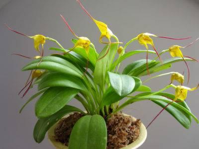 Особенности ухода за орхидеей в домашних условиях до и после цветения. советы. фото, видео