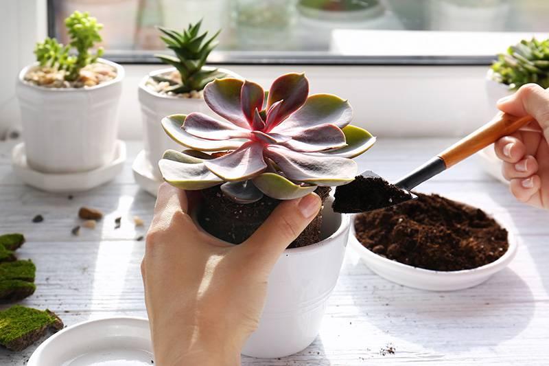 Как выращивать и ухаживать за комнатными растениями?