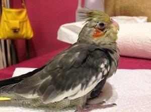 Известные болезни голубей - как их лечить?
