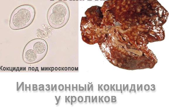Сыпь на теле: на лице, туловище, руках. основные причины появления сыпи на коже. лечение высыпаний на коже в москве