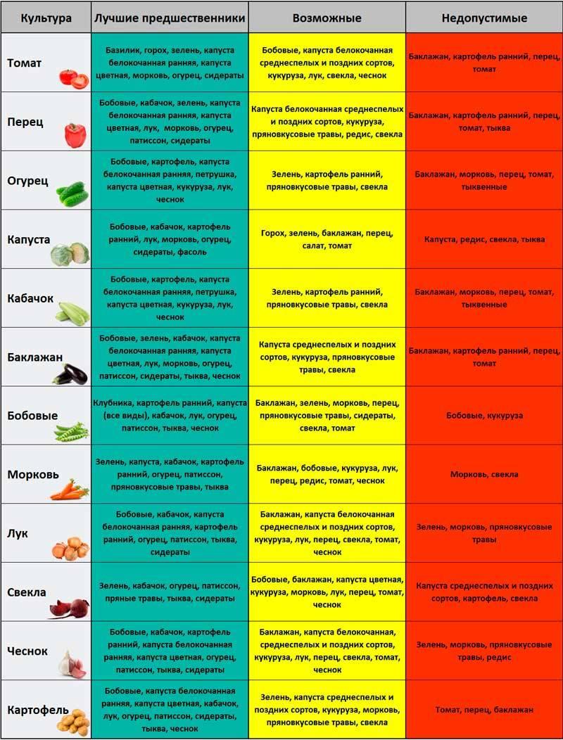 Что сажать на следующий год после чеснока, капусты, моркови, свеклы, лука и других культур