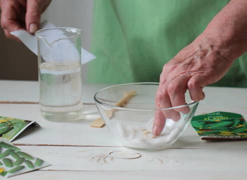 Как и в чем замочить семена огурцов перед посадкой: обработка перед посевом