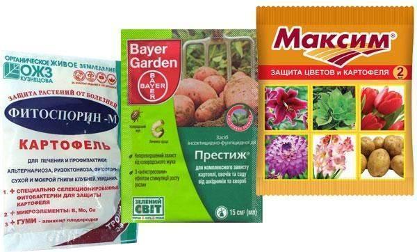 Колорадский жук на картофеле: как осуществить обработку почвы перед посадкой для профилактики, сорта, устойчивые к нему, а также как бороться с вредителем