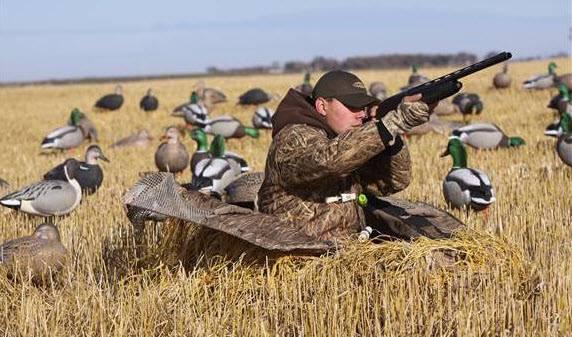 Охота на гуся весной на болоте: от выбора манка до установки скрадка