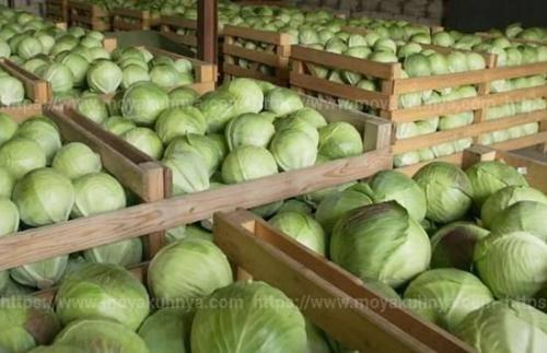 Как хранить капусту в домашних условиях зимой: на балконе или в холодильнике? русский фермер