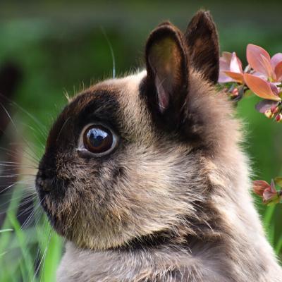 Все о декоративных кроликах в домашних условиях: интересные факты и видео из жизни питомцев все о декоративных кроликах в домашних условиях: интересные факты и видео из жизни питомцев