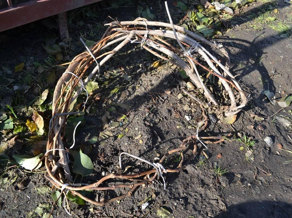 Клематис: подготовка к зиме, принципы осеннего ухода