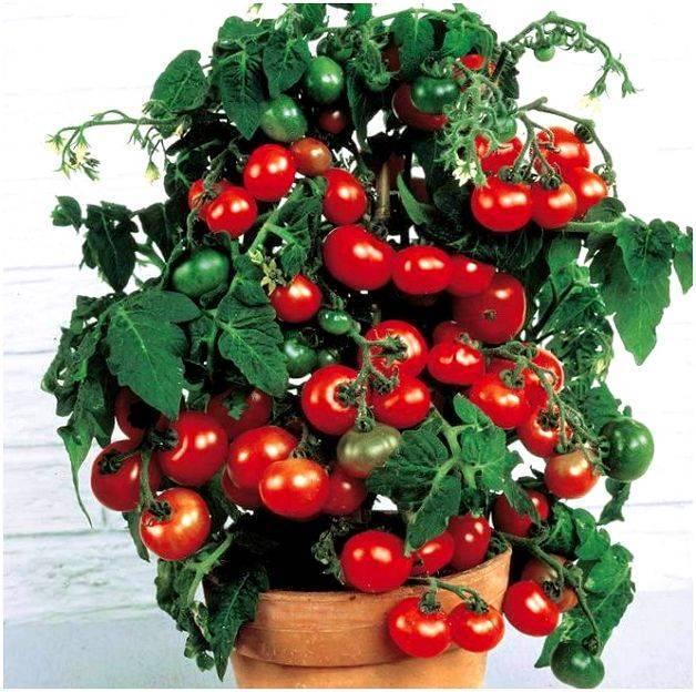 Универсальный раннеспелый сорт помидор под названием «чудо лентяя», описание и характеристики неприхотливого томата