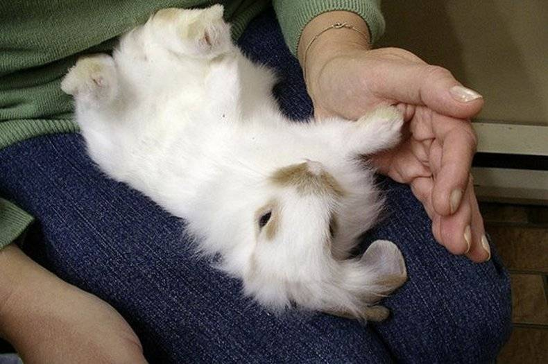 Как определить пол декоративного кролика