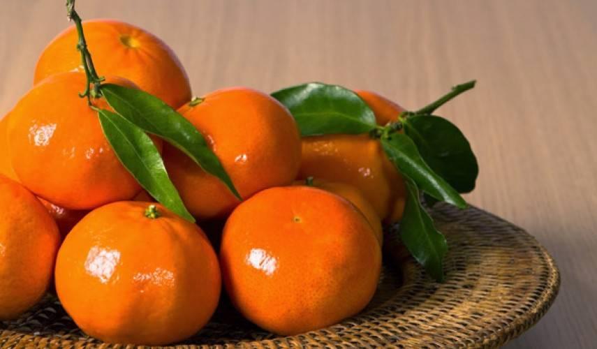 Условия хранения мандаринов - найдены новые способы сохранения вкуса