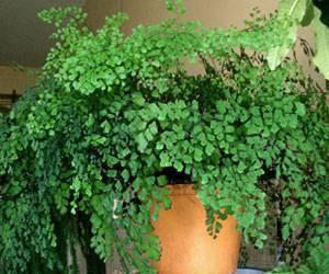 Тенелюбивые и теневыносливые неприхотливые комнатные растения для дома