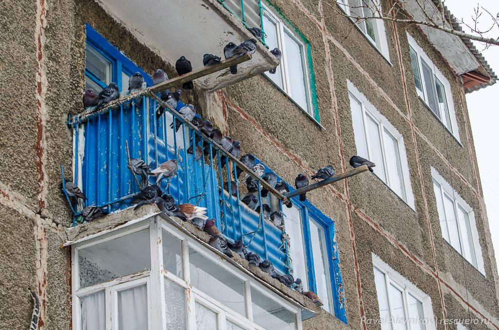 Как избавиться от голубей на балконе и подоконнике