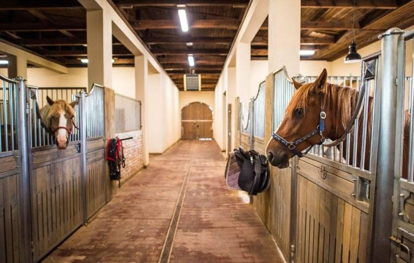 Дитя суровых степей – монгольская лошадь