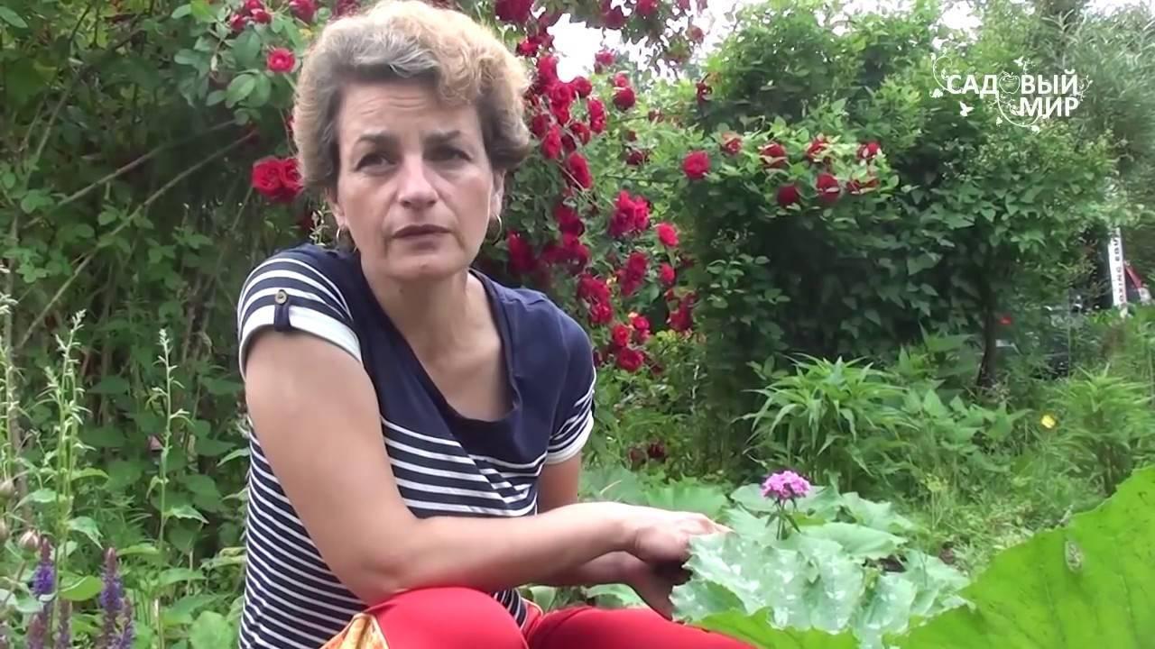 Почему у кабачков много пустоцвета - что делать если нет завязей