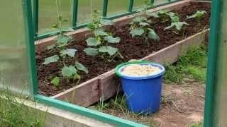 Применение опилок для огорода: польза и вред, какие лучше, правила использования