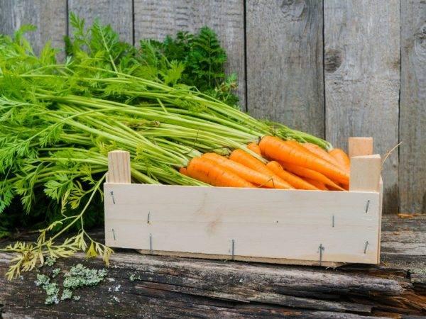 Как хранить морковь на зиму в домашних условиях