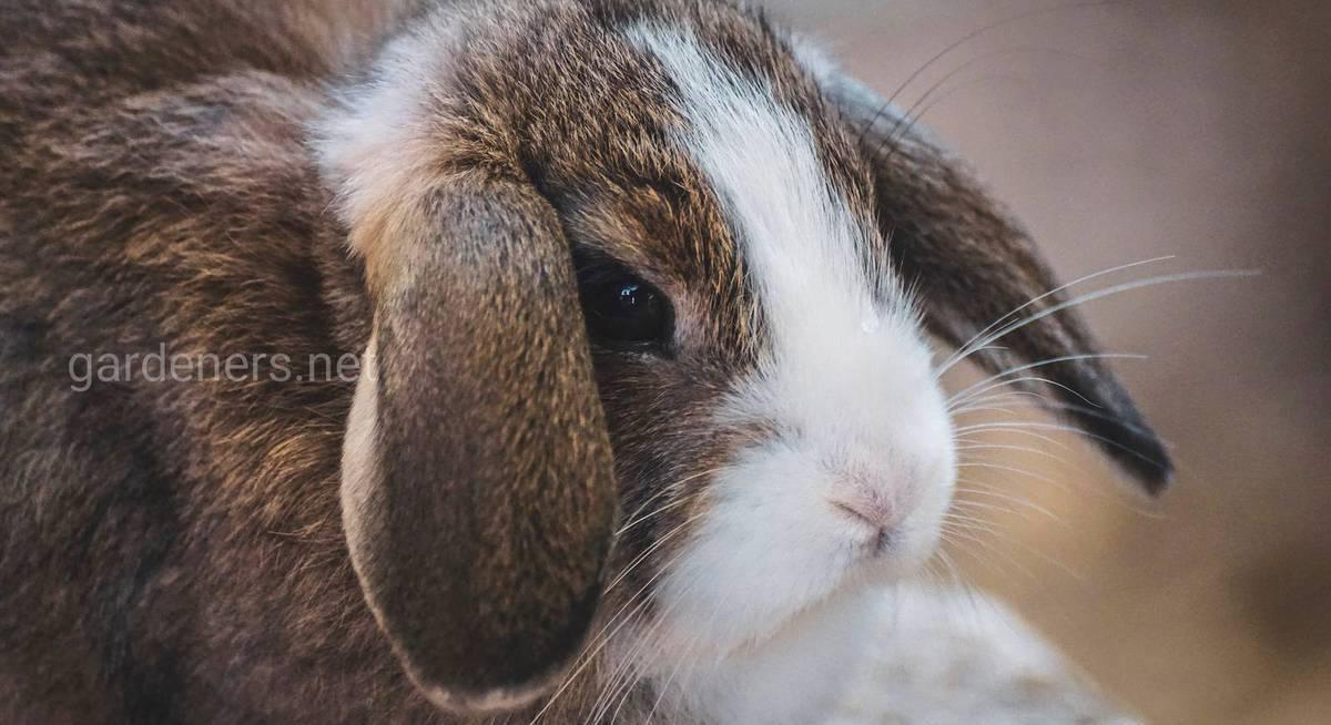 Кусаются ли кролики и что делать, если укусил кролик?