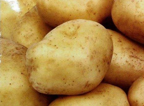 Картофель сказка: описание сорта, фото кустов и урожая, отзывы о преимуществах и недостатках