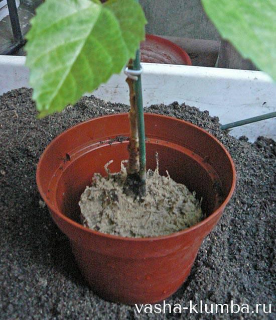 Пересадка комнатных растений: когда, как и строго по правилам