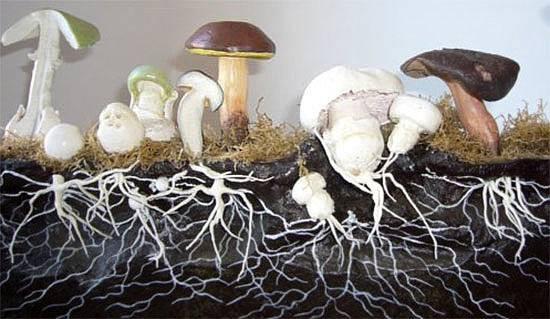 Что такое сапротрофы? основные группы и примеры сапротрофных организмов — природа мира