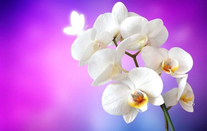 Как заставить орхидею цвести? почему растут только листья и корни? что нужно делать, чтобы орхидея зацвела в домашних условиях зимой?