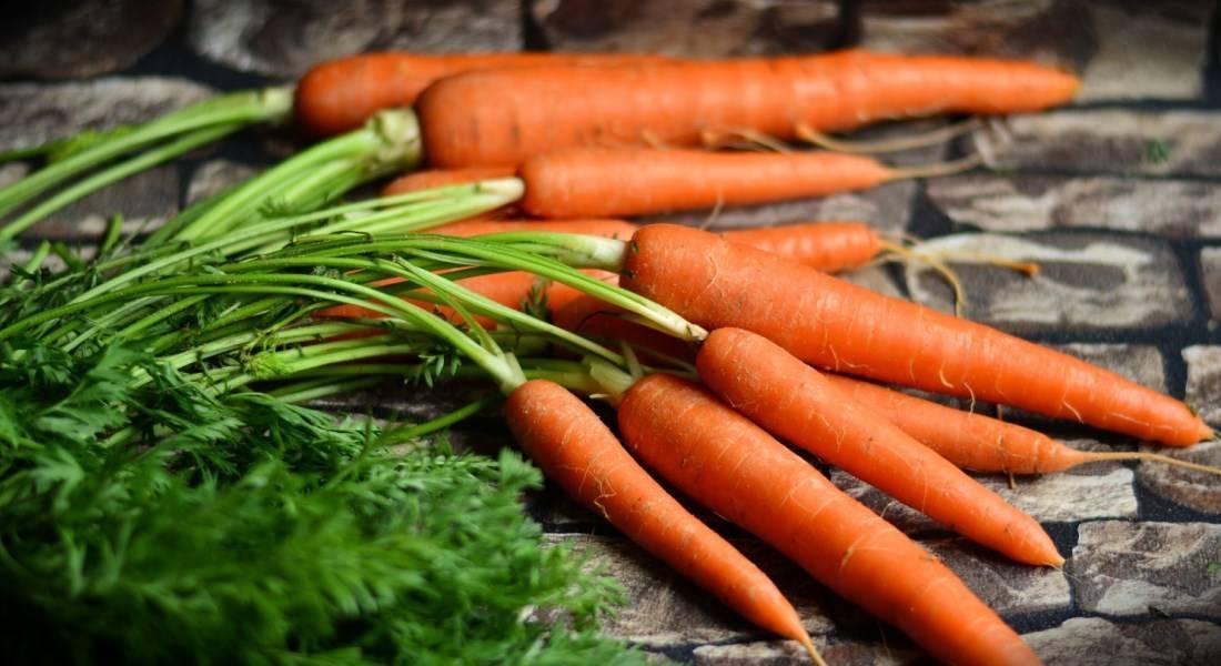 Как вырастить морковь крупную и сладкую | zelenysad.ru