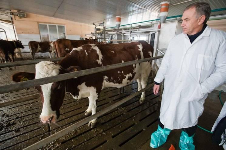 Искусственное осеменение коров