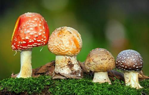 Грибы в природе и в жизни человека. значение грибов в природе и жизни человека