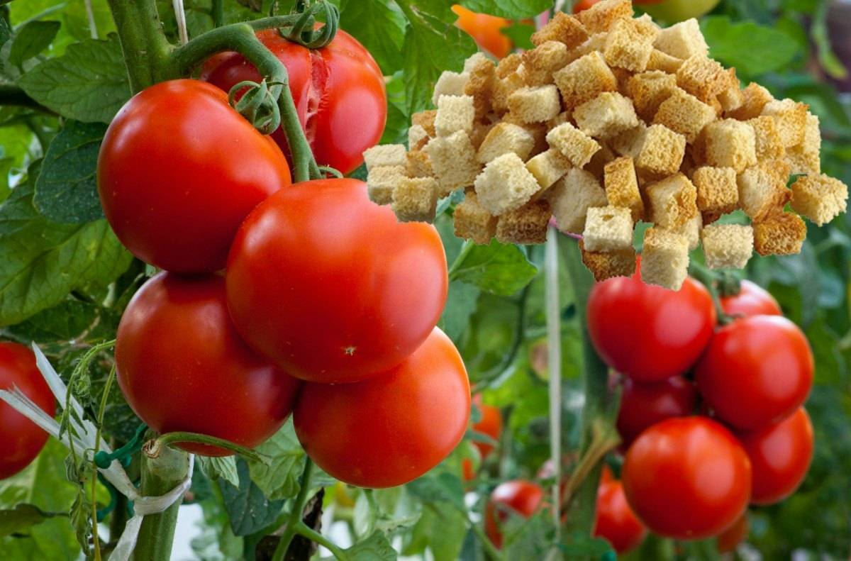 Что положить в лунку при посадке томатов: добавляем удобрения правильно