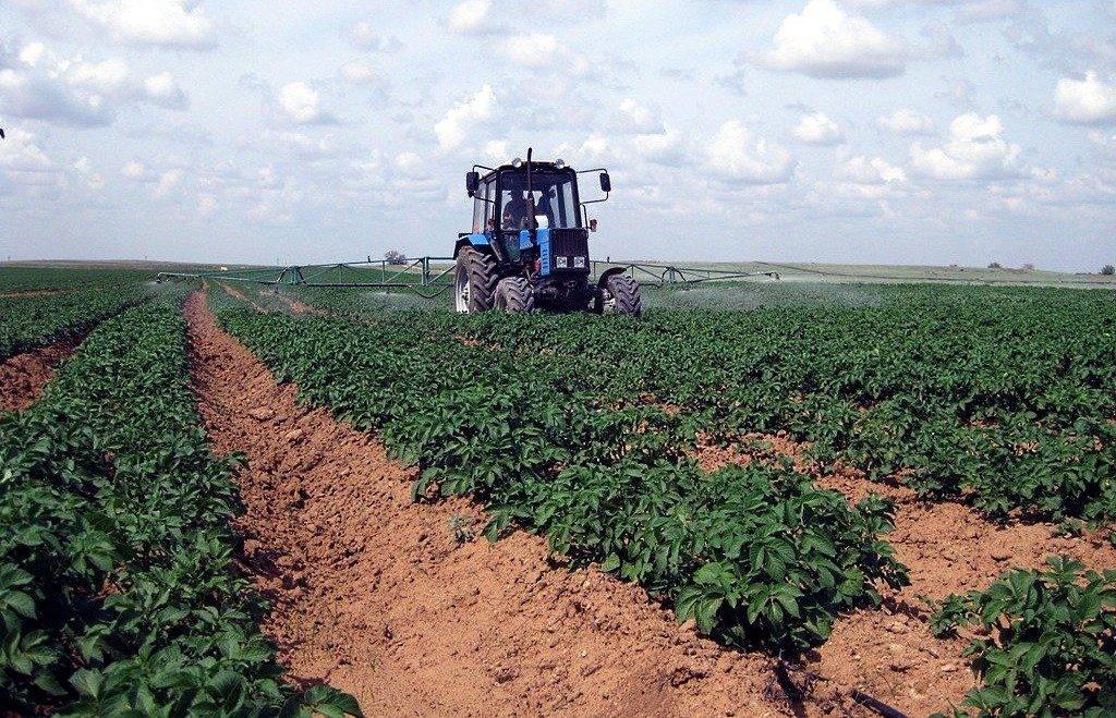Повышенный урожай картофеля по голландской технологии