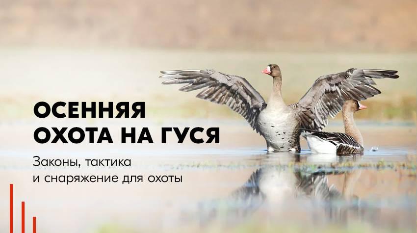 Открытие осенней и зимней охоты в 2020 | календарь охотника