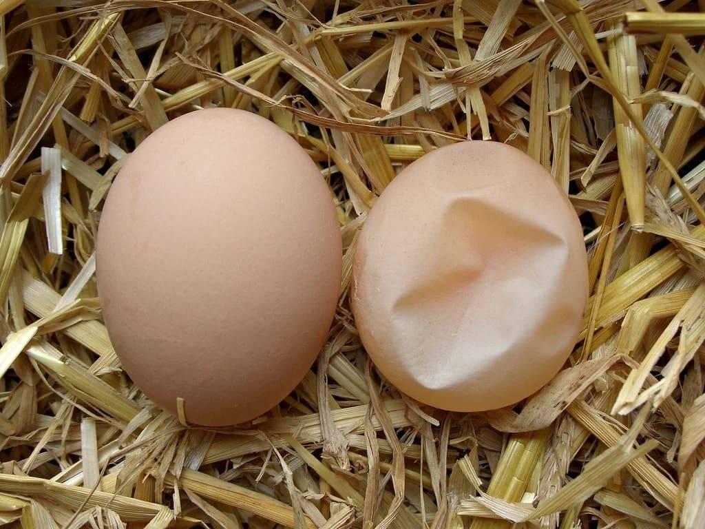 Почему куры несут яйца без скорлупы: причины и решение, фото и видео