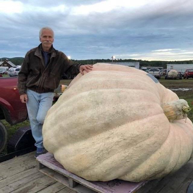 Самая большая тыква в мире: фото размеров и вес огромной тыквы