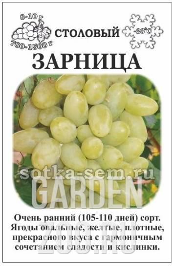 Винограда «зарница»
