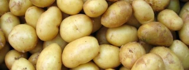 ᐉ сорт картофеля «лидер» – описание и фото - roza-zanoza.ru