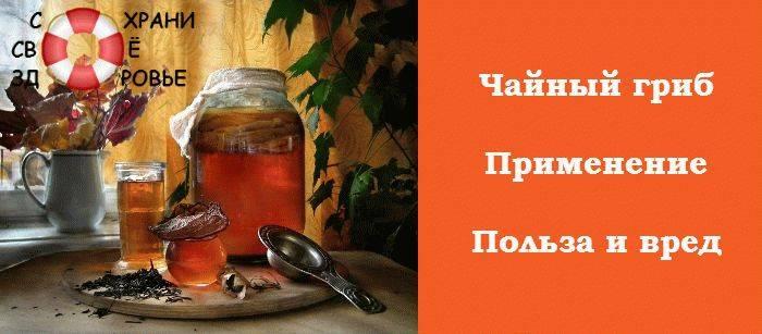 Чайный гриб: лечебные свойства и противопоказания, польза и вред