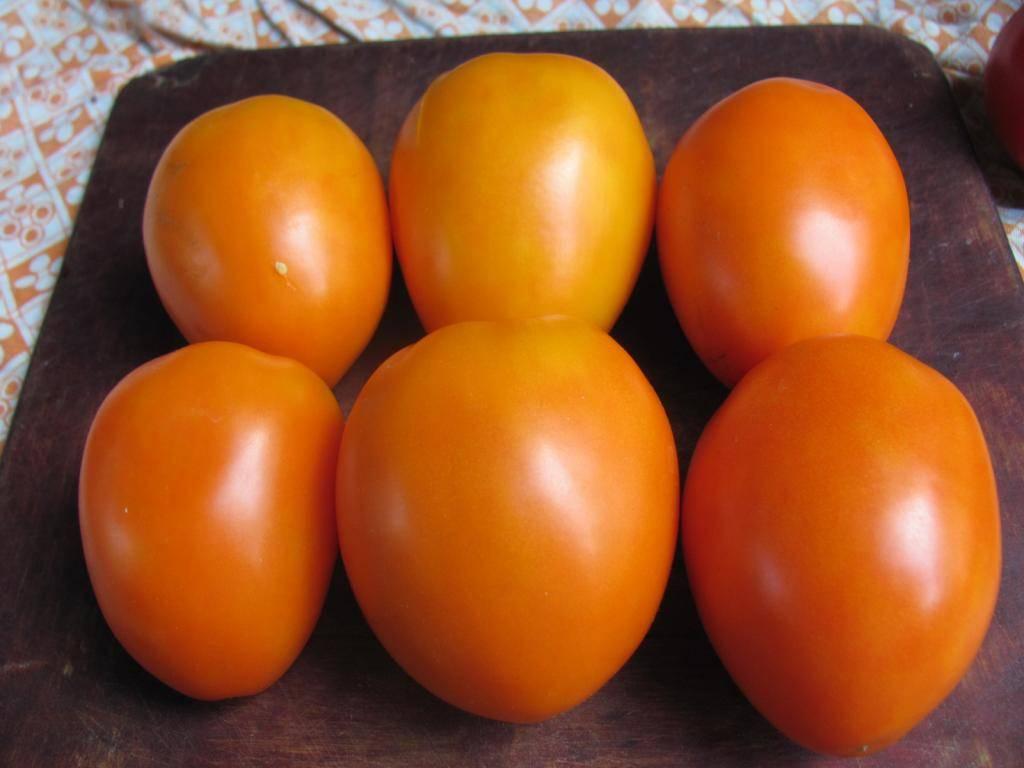 Выращиваем полезный томат «виагра»: описание сорта и фото