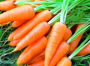 Как зимой лучше хранить морковь: в погребе, подвале, подполе и в условиях городской квартиры