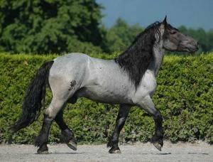 Чубарая масть лошади: описание и фото масти | мои лошадки