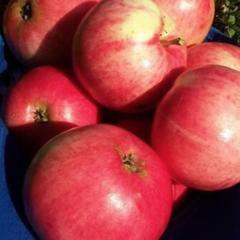 """Яблоня """"малиновка"""": описание сорта, фото, отзывы"""