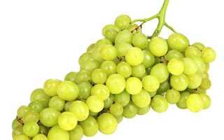 Новая селекция столового винограда — кишмиш аксайский - сорта винограда, столовые | описание, советы, отзывы, фото и видео