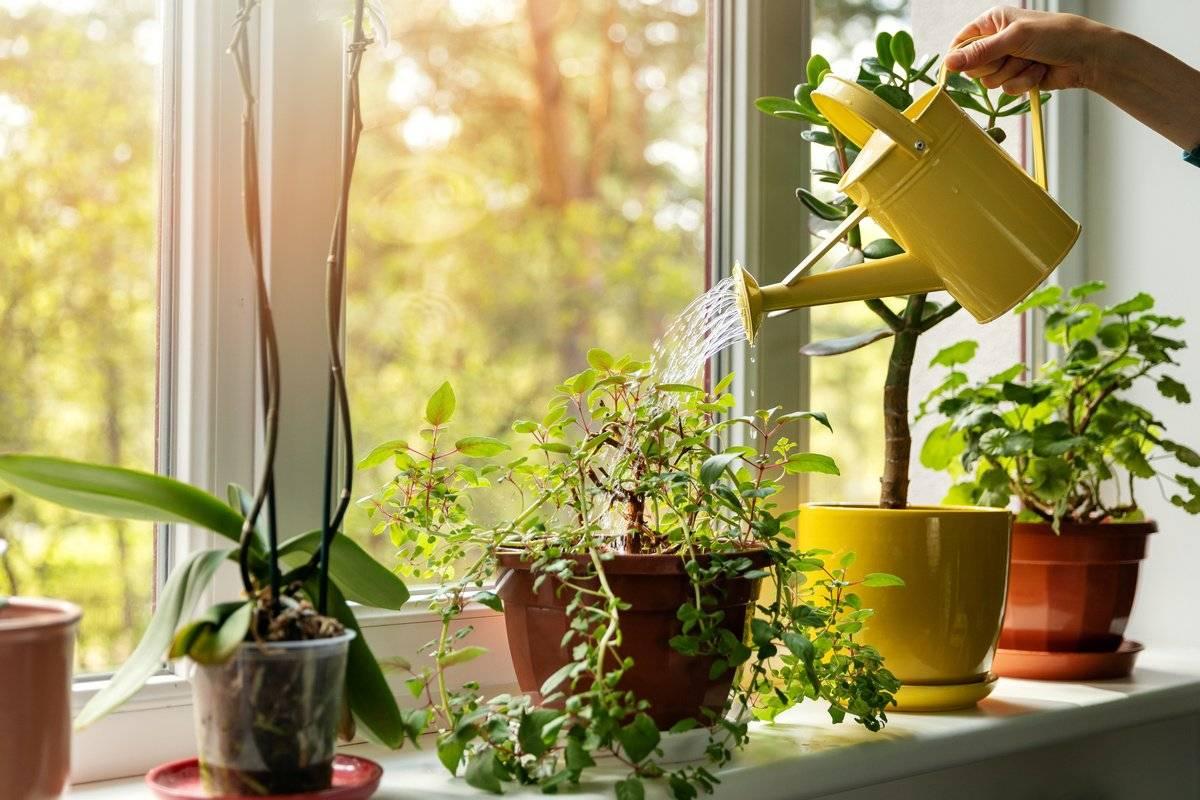 Вот почему цветы в доме растут хорошо. 10 правил ухода за комнатными растениями