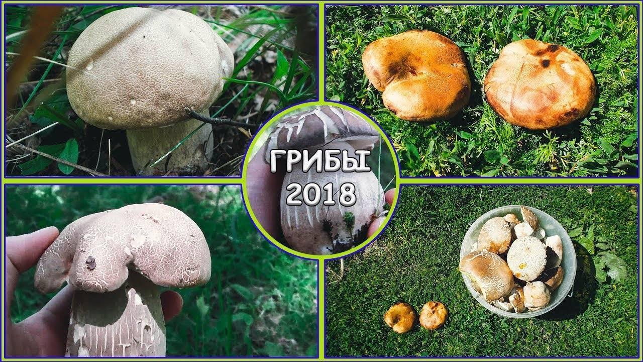 Весенние грибы 2020: съедобные, несъедобные и ядовитые