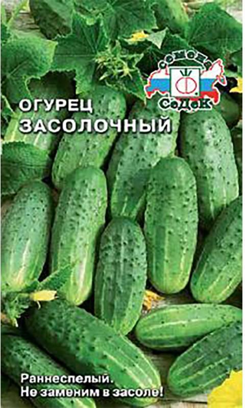 Засолочный огурец: описание, выращивание, уход, фото