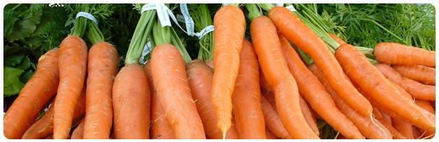 Почему морковь цветет? фото и рекомендации огородникам, что делать, чтобы сохранить урожай