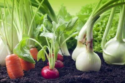Удобрения для лука, подкормка при посадке и выращивании