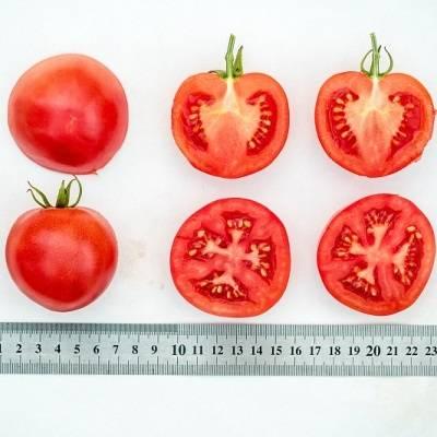 Выращивание помидор по маслову или как увеличить урожай томатов в 8 раз
