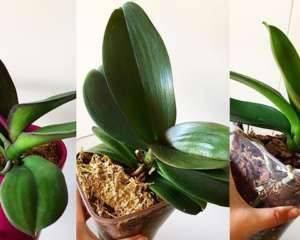 Секреты, как заставить орхидею цвести в домашних условиях