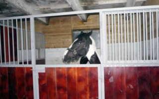 Денник для лошади: виды, требования к стойлу, обустройство, фото