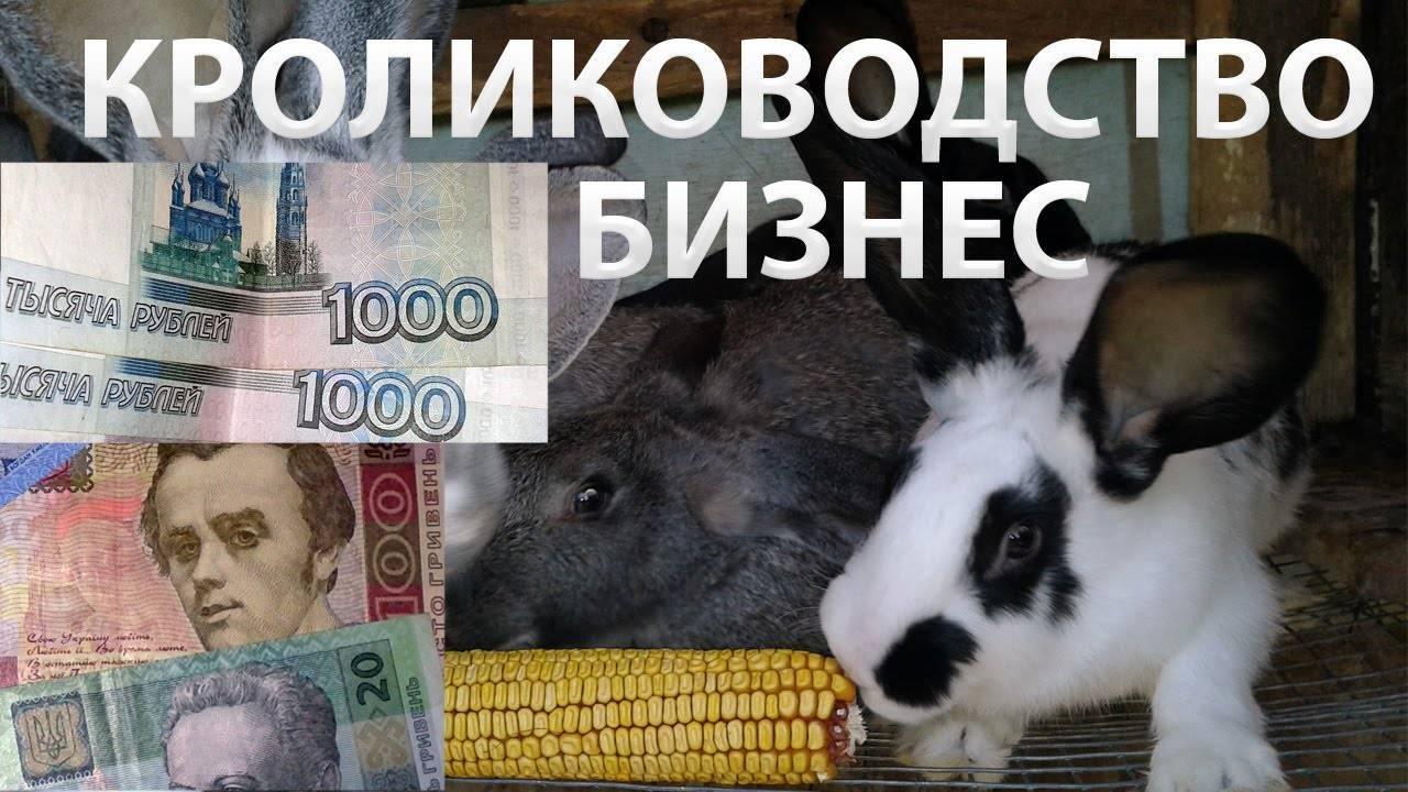 Разведение кроликов как бизнес выгодно или нет?